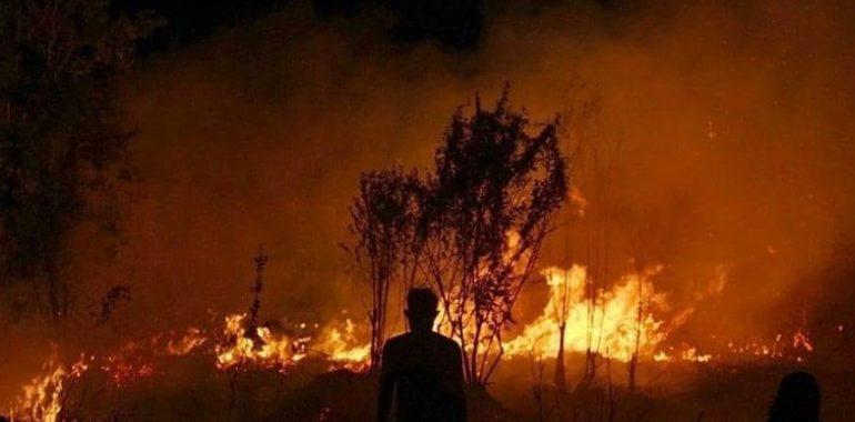 نحن وحرائق الأمازون